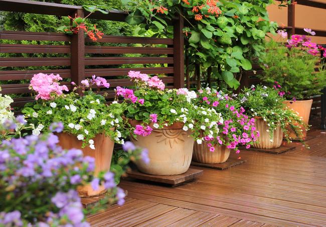 balcony container gardening